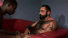 Mighty hairy bear makes ebony guy squeal when he penetrates his ass